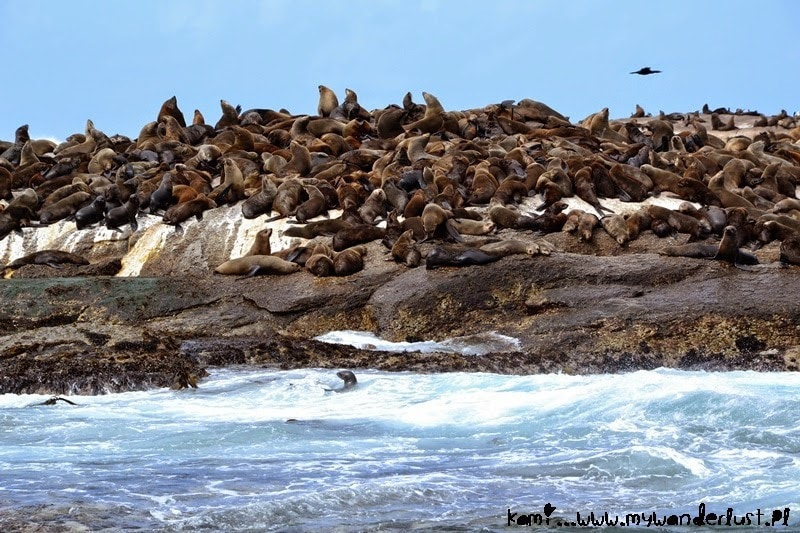 seals-south-africa