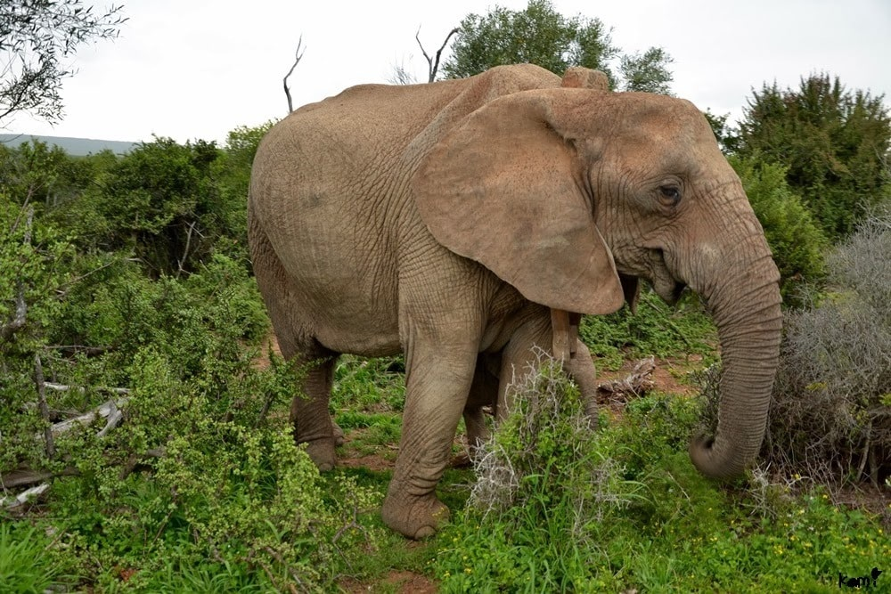 South Africa animals