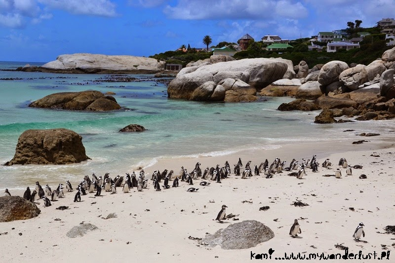 penguins-south-africa