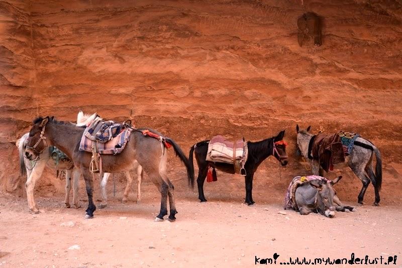 petra-donkeys
